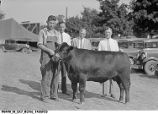 1933 Indiana State Fair Champion Steer Sold to Kingan & Company